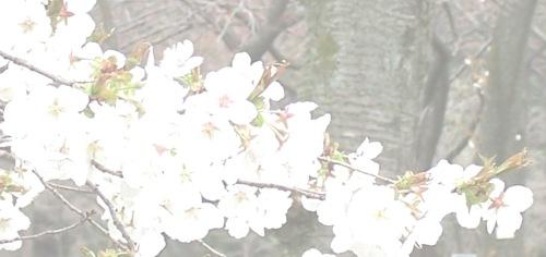 cherryslice
